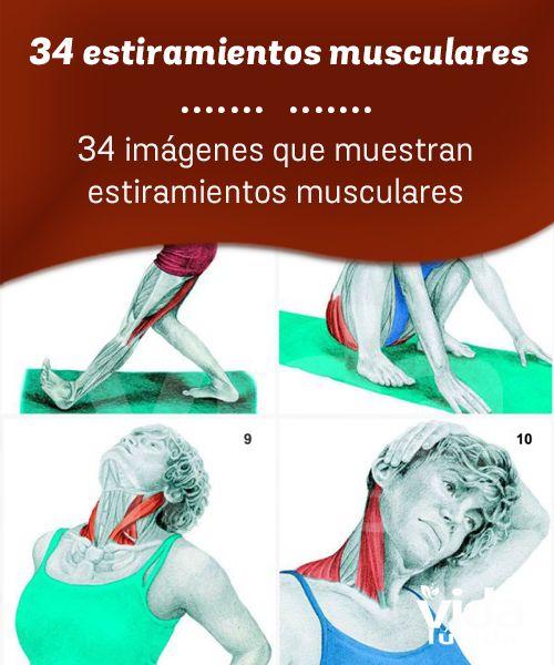 34 estiramientos musculares y su explicación.
