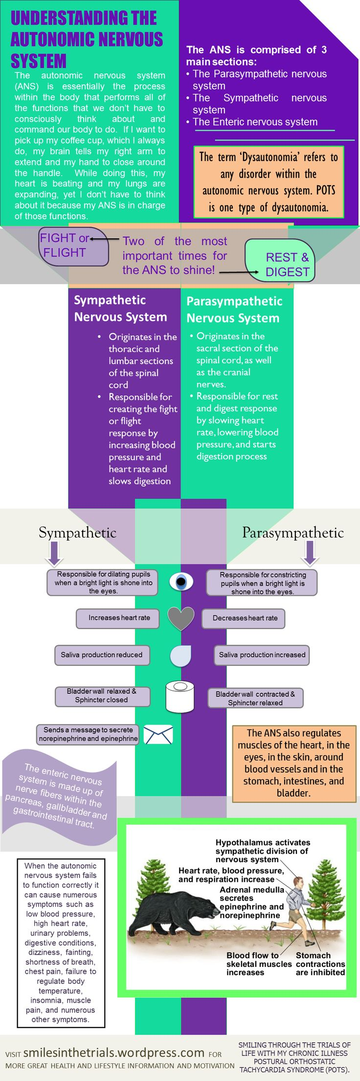 Autonomic Nervous System Infographic. All about dysautonomia. Follow along on my blog about my life with POTS  ( postural orthostatic tachycardia syndrome).
