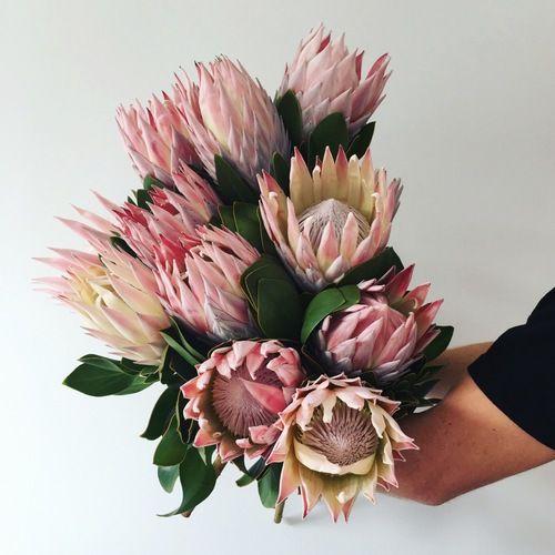 King Proteas | MyFlowerMan | Sydney | Australia | Florist | Online Ordering | www.myflowerman.com.au