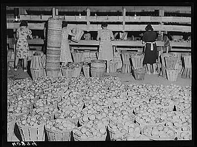 Kings-Creek-Packing-Company-Somerset-County-Kings-Creek-Maryland-MD-1940-FSA-1