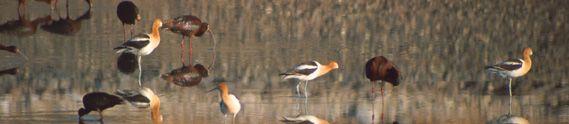 http://www.cityofhenderson.com/parks/parks/bird_preserve.php     Henderson Bird Preserve