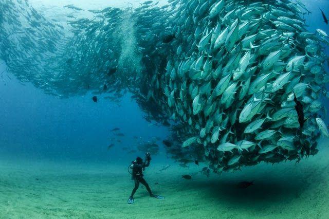 """Impresionante fotografía tomada bajo el agua. """"David vs. Goliath"""".  Encuentra las mejores cámaras para tomar fotos bajo el agua en Apumanque."""