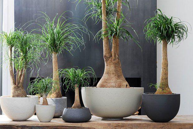 Самые неприхотливые и живучие комнатные растения » Женский Мир
