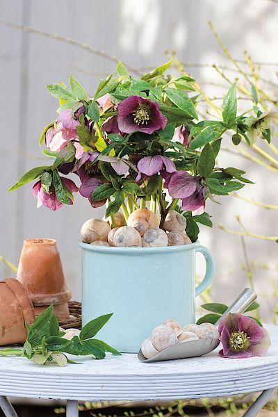 Dekorativní mulč. Stačilo málo a květináč s čemeřicí získal neotřelý a přirozený půvab.