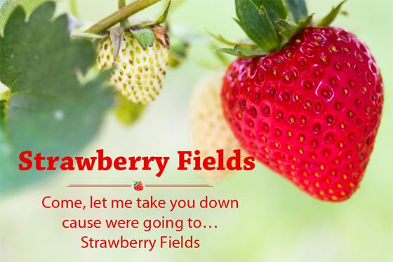 Strawberry Fields - Ontdek alle onze Aardbeien Thee