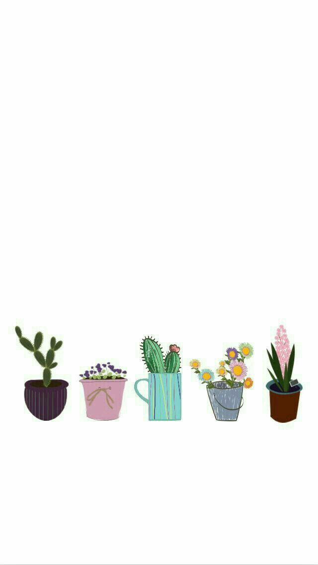 I Love House Plants In 2019 Cactus Pictures Aesthetic