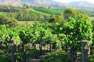 Upper Goulburn Wine Region
