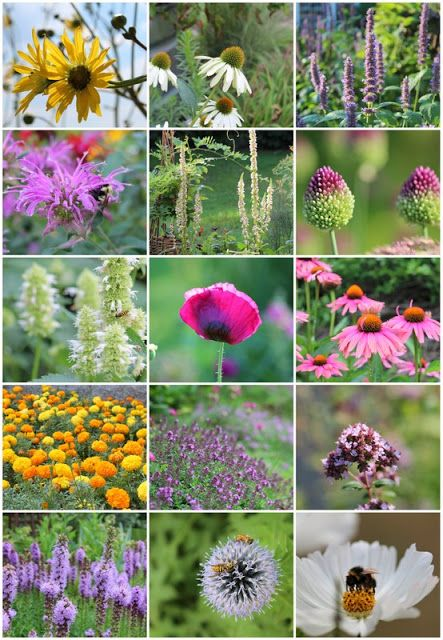 En bi-bevægelse: Planter, der tiltrækker bier.
