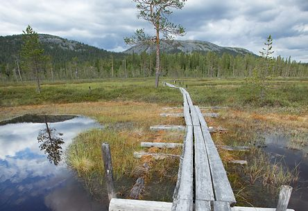 Scenery in Pyhä-Luosto National Park. Photo: Tea Karvinen