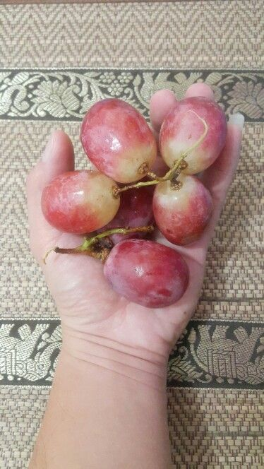 Big grapes