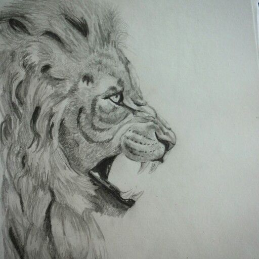 art lion pencil drawing animal drawing pinterest lion art and drawings