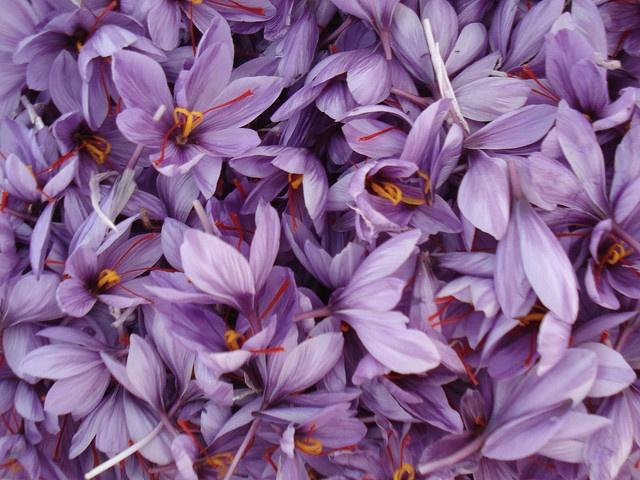 """saffron flower means """"be cautious of excess pleasures; voluptuousness""""."""