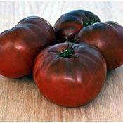 Brandywine Black Heirloom Tomato Plant