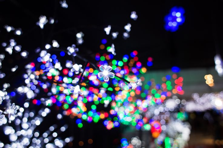 Christmas lights twinkle and shine as bright as the stars in the sky on a cold, clear night. #Christmas