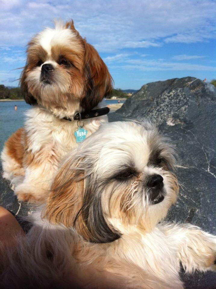 How Much Do Bernese Mountain Dog Puppies Sleep