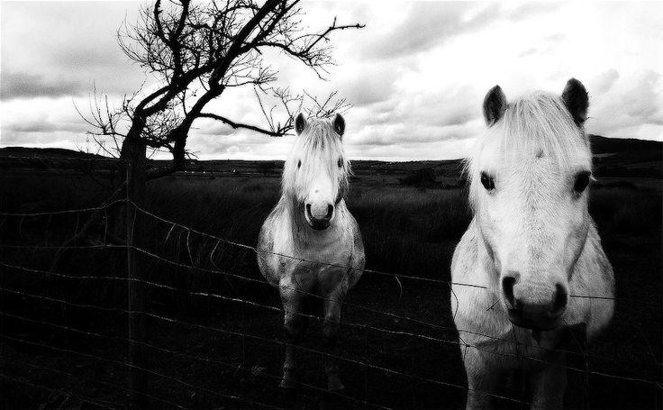 10 impresionantes fotografías en blanco y negro para inspirarte