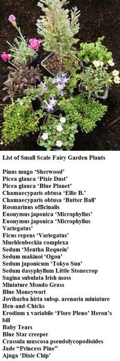 List of Small Scale Fairy Garden Plants