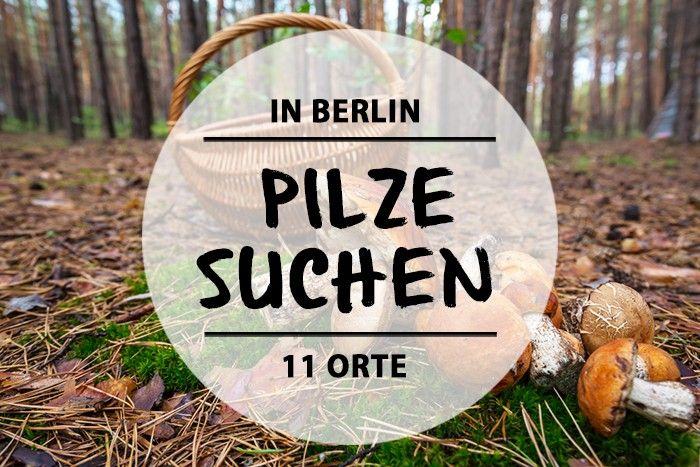 Pilze suchen