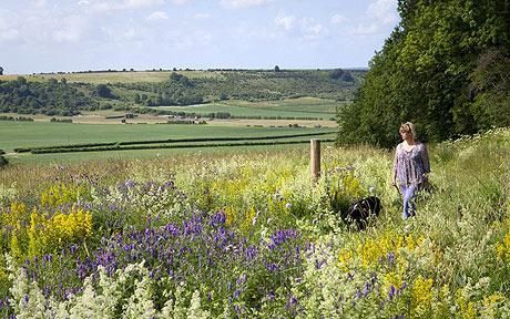 English wildflower meadow - linked to article by Sarah Raven who is campaigning for wildflower planting in urban locations.