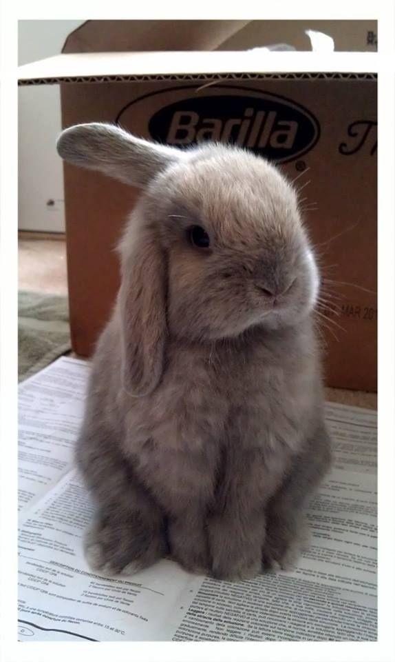 …Bunphrey Bogart, a bunny whose amazing name just wasn't enough to beat… | ...Bunphrey Bogart, a bunny whose amazing name just wasn't enough to beat...
