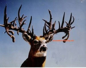 BREAKING NEWS: New World Record Nontypical Found at Garage Sale? on http://www.deeranddeerhunting.com