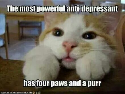 """My mom used to put mine on my lap when I was cranky and said """"Here, happy pill."""""""