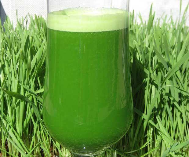 Sağlık İçin Çim Suyu İçinHer gün 3 çorba kaşığı (30 ml) taze sıkılmış buğday çimi suyu, 250 ml karışık taze meyve suyu, 400 ml taze yeşil sebze suyunu besin değerleri kaybolmadan, sıktıktan hemen sonra bekletmeden posalı bir şekilde tüketmek gerekmektedir.    Yazının Devamı: Sağlık İçin Çim Suyu İçin   Bitkiblog.com  Follow us: @bitkiblog on Twitter   Bitkiblog on Facebook