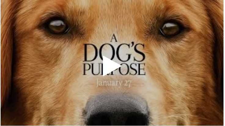 Online Pet Supply Stores - A Dogs Purpose - http://petsuppliessales.com/blog/online-pet-supply-stores-a-dogs-purpose Please visit us to watch more videos  http://petsuppliessales.com/blog/online-pet-supply-stores-a-dogs-purpose
