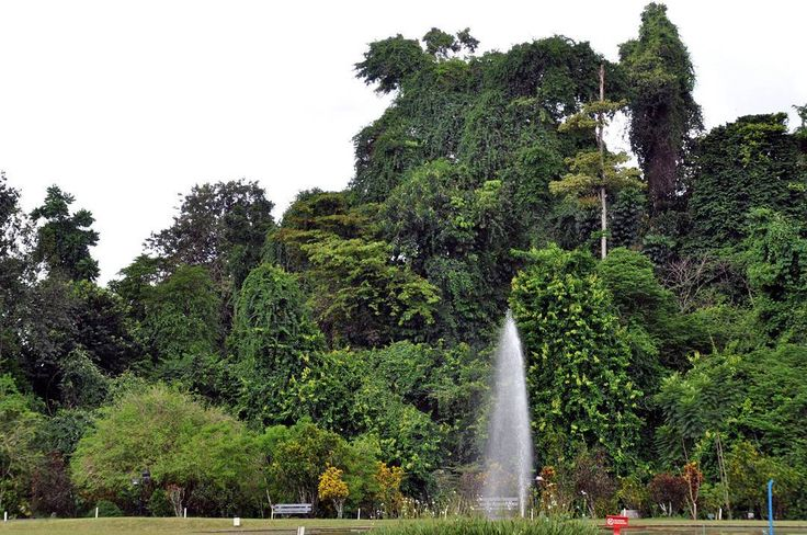 The area that is now Bogor Botanical Gardens was part of the man made forest that was established at least around the era when Sri Baduga Mahraja (Prabu Siliwangi 1474-1513) ruled in Sunda Kingdom as written in the Batitulis inscription.  - Be a 'Responsible Traveler' and respect for the destinations we visit.  Help sustain the natural and cultural beauty of a destination by leaving it untouched and by reducing your use and waste of precious resources such as water food and energy…