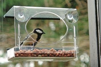 vogels voor je neus bij het raam van je klaslokaal