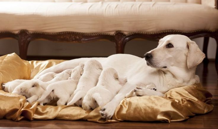 El aborto en los perros Hay muchas razones por las que los dueños de mascotas les gustaría prevenir el embarazo en sus mascotas. Es una preocupación común, y hay maneras de realizar una interrupción del embarazo seguro, si su perra ha quedado embarazada. Si usted está considerando poner fin a …