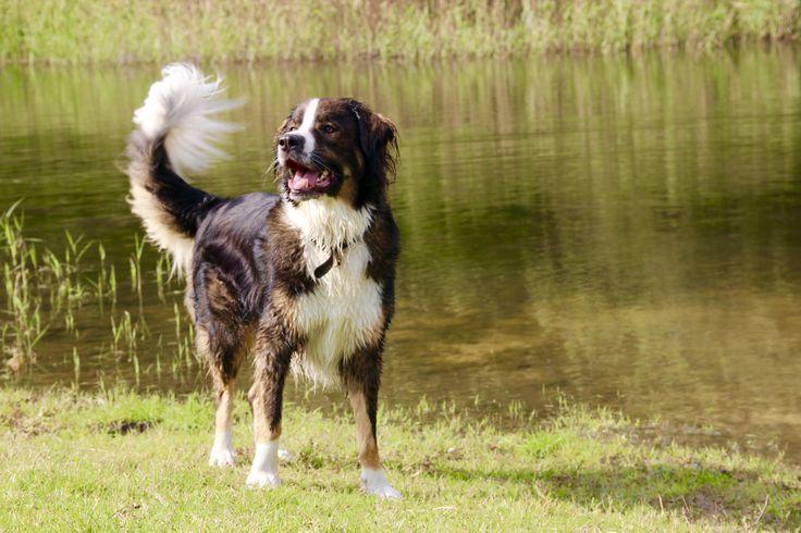 Fun@park #dogmodel #dog #koningbinc #animal #lovemydog #dogs