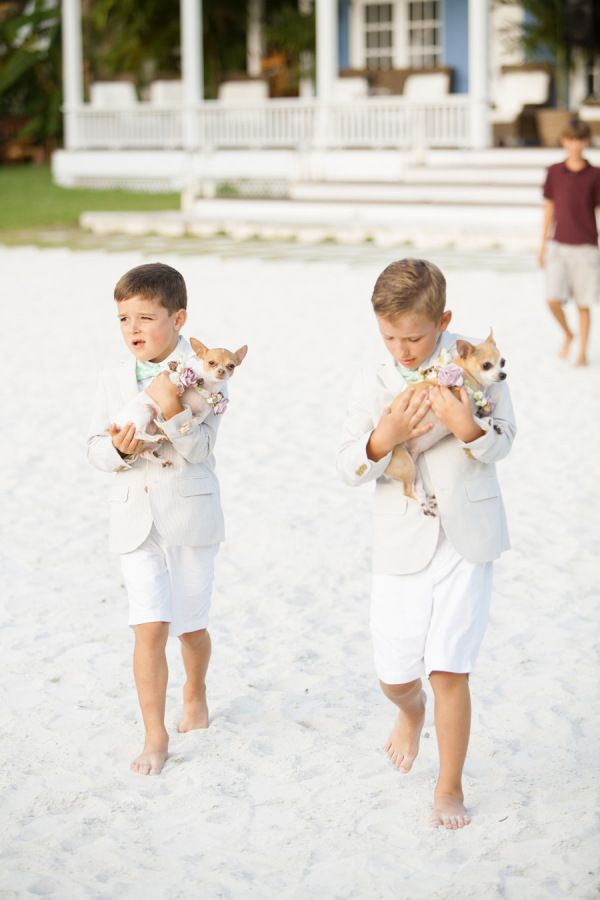 156 best Ring Bearers images on Pinterest Marriage Wedding and