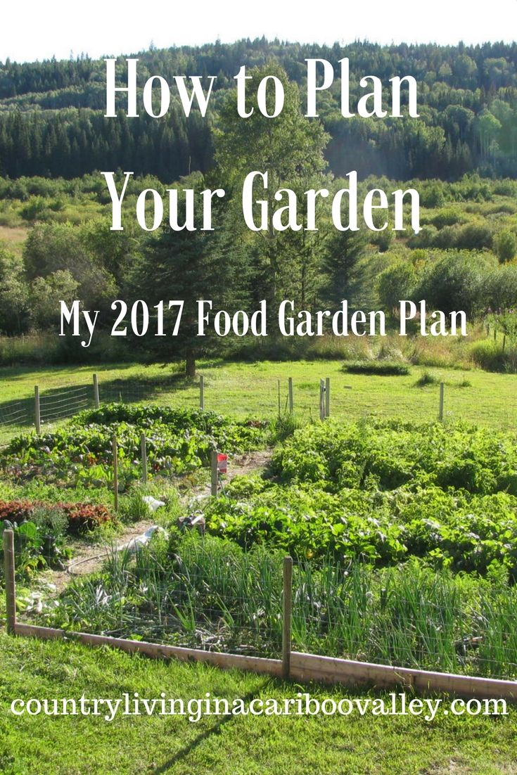 Think carefully about WHAT to plant this year in the garden. Here's my 2017 plan!