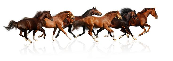 http://moxie.at/bilder/misch/laufende_Pferde.jpg