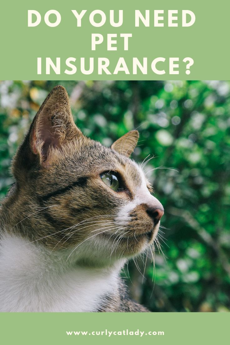 Should You Get Pet Insurance