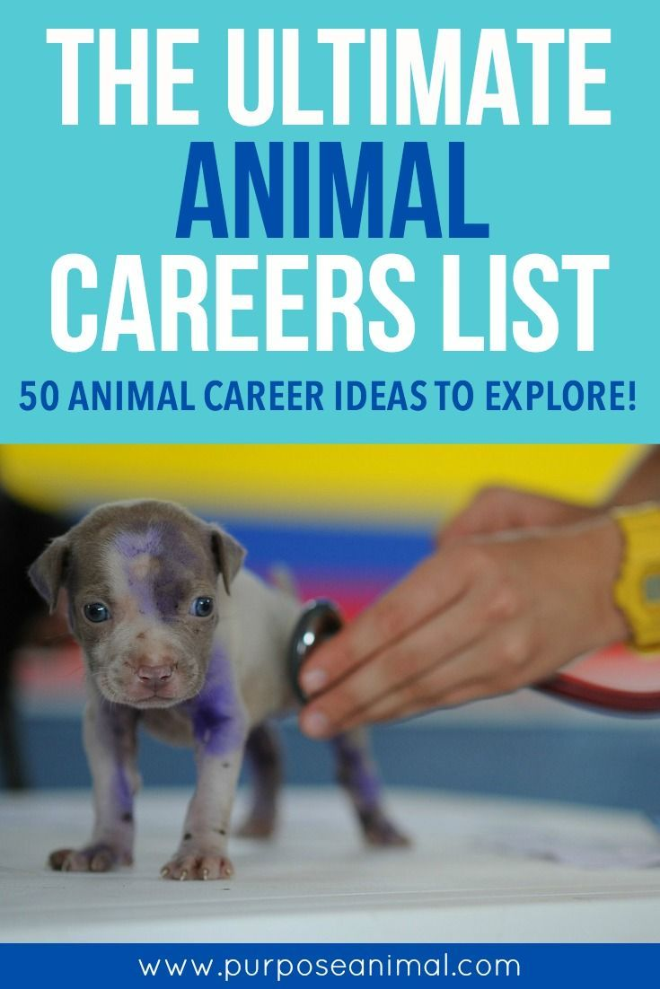 images about exotic animal careers career the ultimate animal careers list check out this awesome article which lists 50 animal career