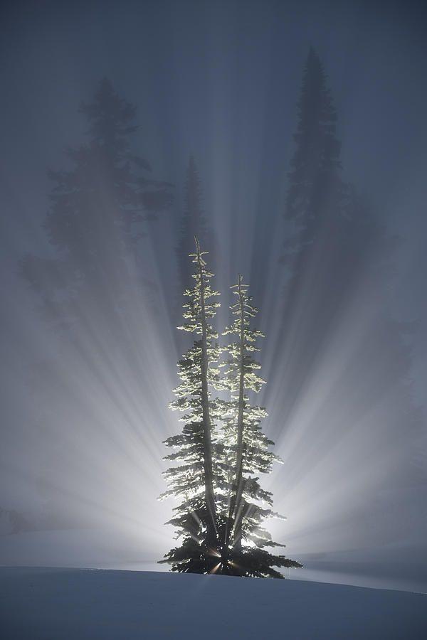 ✯ Cedars Delight Glorious