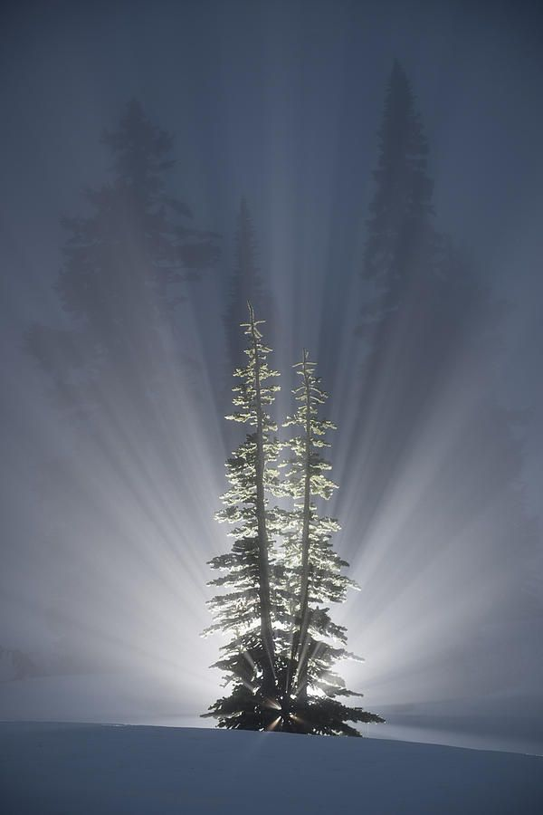 Sunrise Bursts through the Cedar Trees with rays of Glory!