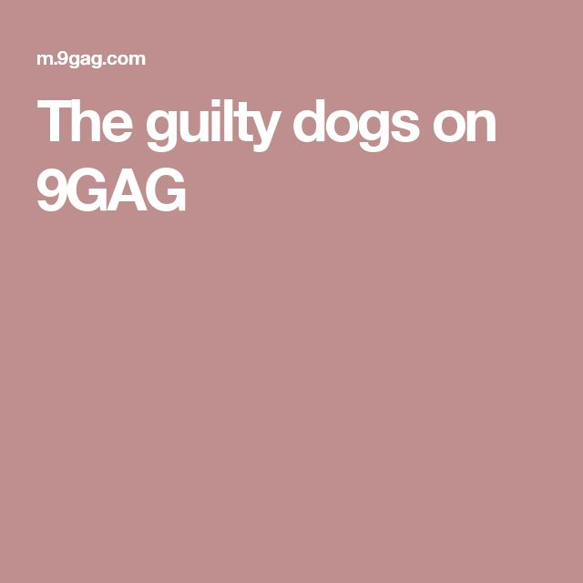 The guilty dogs on 9GAG