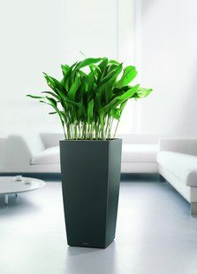 Fresh Best Flowering Office Plants
