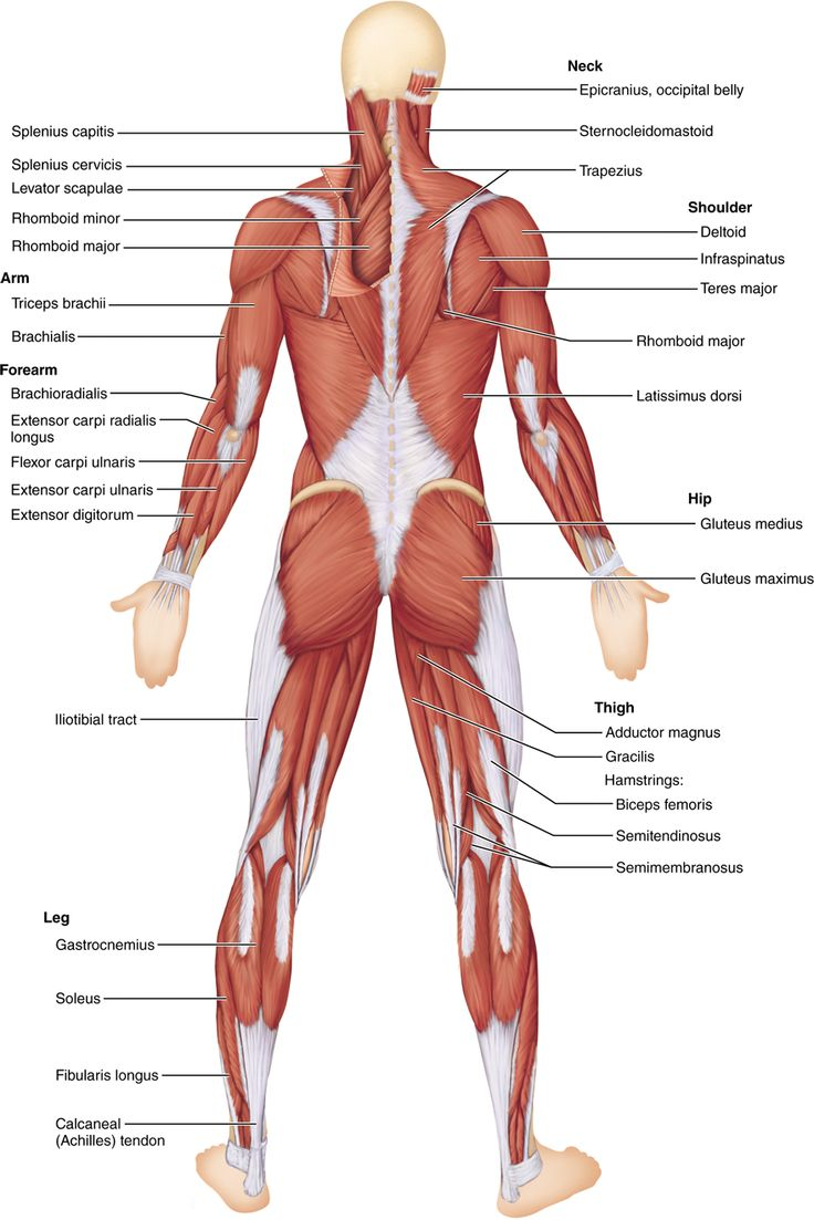Learn Medical Terminology and Human Anatomy - mandegar.info