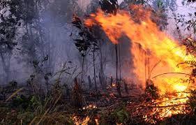 Tujuh korban tewas telah dilarikan ke Rumah sakit umum daerah (RSUD) Magetan, Jawa Timur. Tim SAR kembali menyisiri lereng gunung Lawu setelah diduga masih ada korban lainnya yang terjebak akibat k…