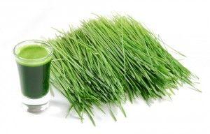 Cudowna trawka pszeniczna przywraca siwym włosom naturalny kolor i zapobiega…