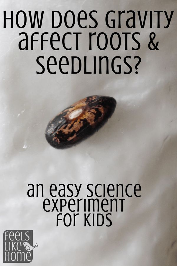 Kids love to watch things grow. This simple, easy, and cool experiment shows them how gravity affects developing plants. The results are so cool!
