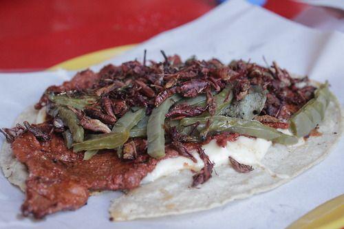 Taco de cecina enchilada con nopalitos y chapulines. Tepoztlán, Morelos