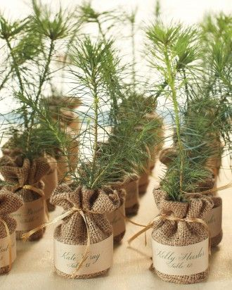 White pine sapling favors play double duty calligraphed with table assignments #giftsthatgrow