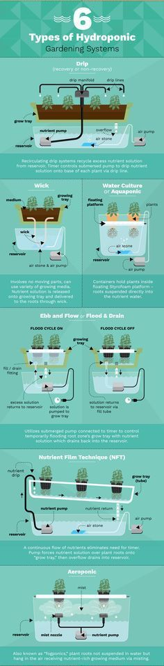 Clean gardening with hydroponic systems are the way to go!  You can have your own food grown in pure water free from synthetic pesticides, antibiotics and all sorts of harmful things you don't want in your food.