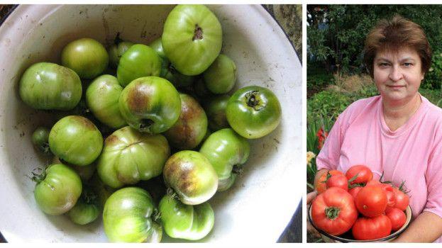 Zdravé, červené a sladké: Prekvapivo jednoduchý spôsob, ako ochrániť rajčiny pred plesňou a zvýšiť úrodu – stačí zájsť do lekárničky!