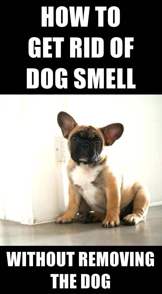 Cuddling With Your Dog Often Means Your House Begins To Smell Like